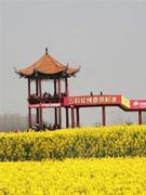 """荆门市""""中国农谷""""核心区旅游开"""