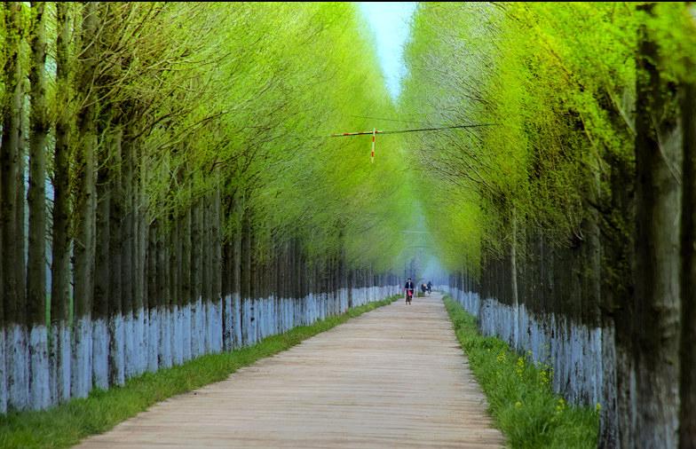 美丽乡村规划景观在风景园林规划与设计中的意义