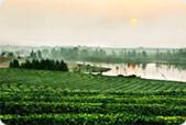 江西生态农业示范园