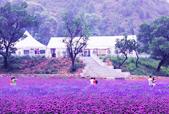 紫海香堤香草艺术庄园