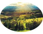 农地入市为乡村旅游开发提供土地资源