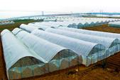 科技化现代化产业化农业村庄